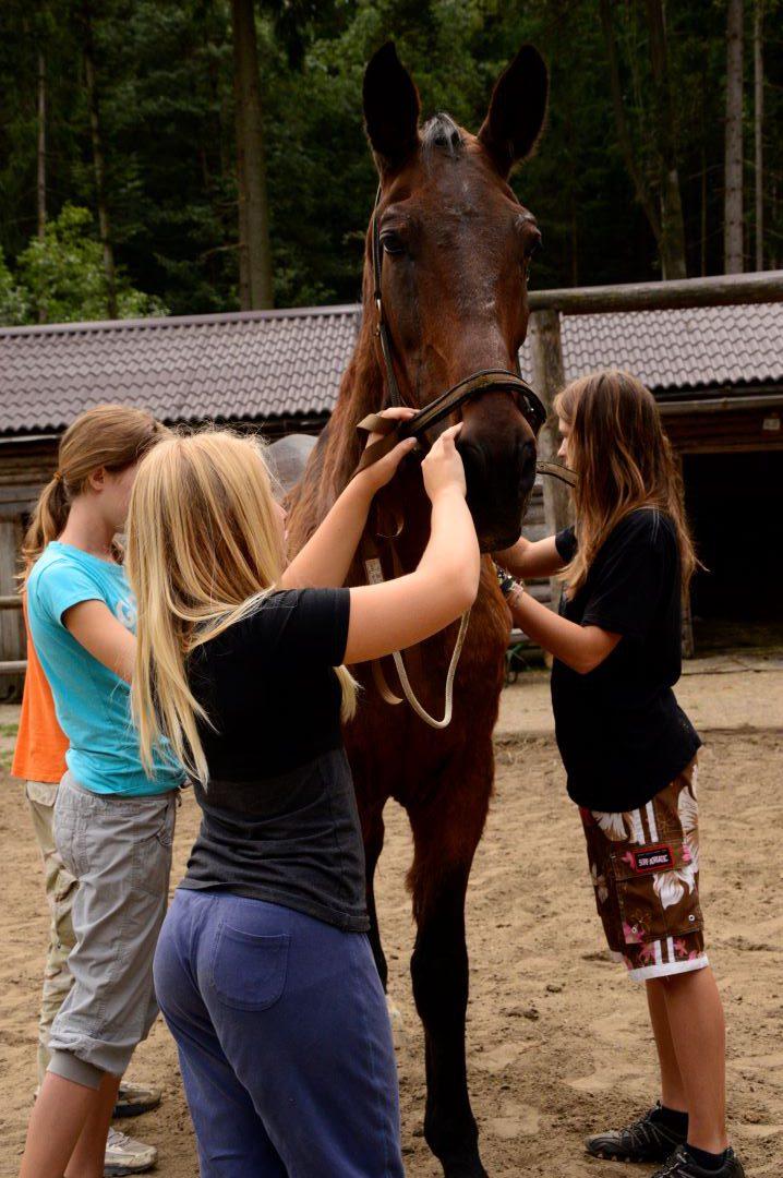ranč kaja in grom Tellington TTouch mladi 13