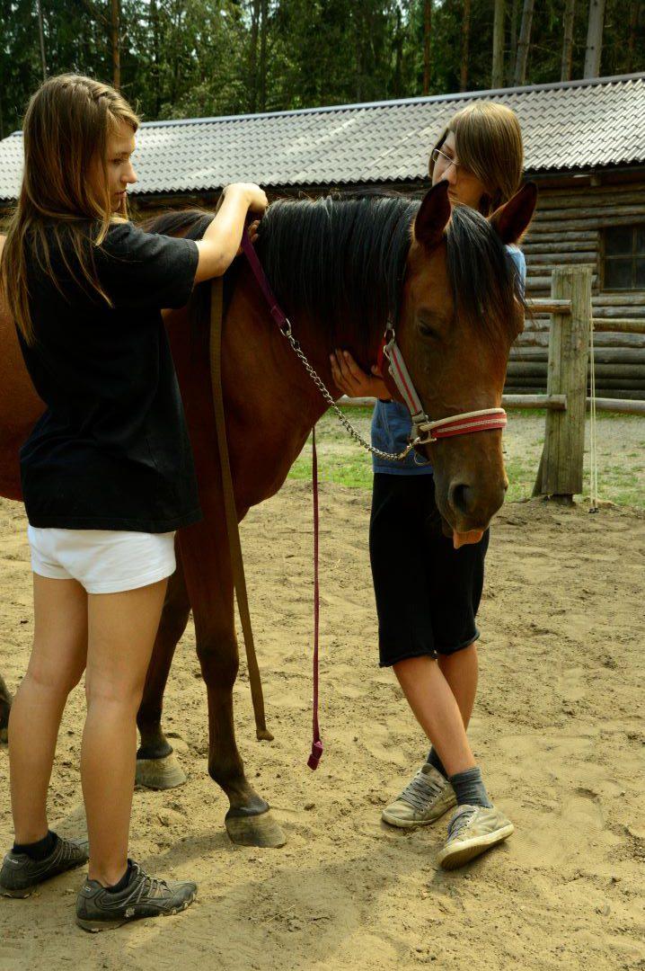 ranč kaja in grom Tellington TTouch mladi delo na telesu konji