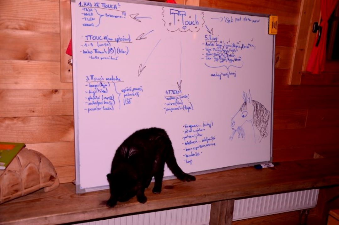 ranč kaja in grom Tellington TTouch mladi maček