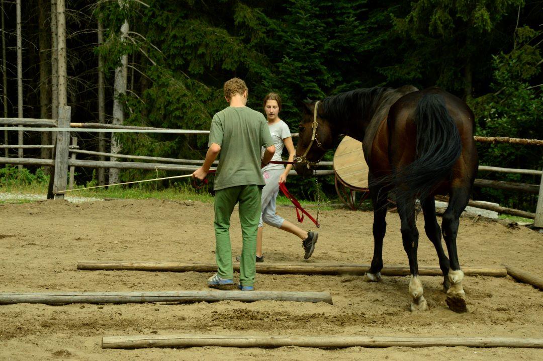 ranč kaja in grom Tellington TTouch mladi vodenje