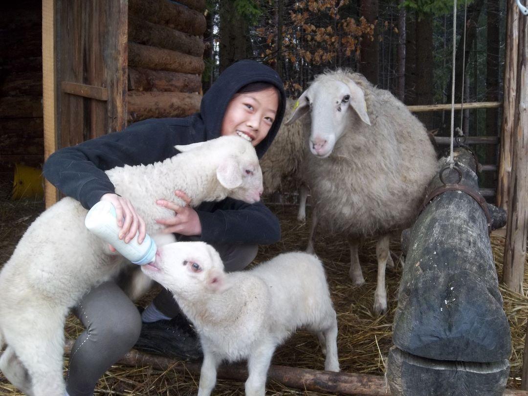 ranč kaja in grom animal ambassador center slovenija ovca 3