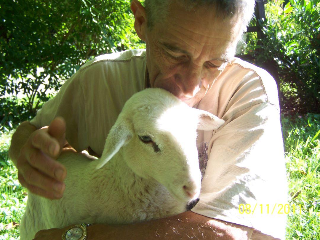 ranč kaja in grom animal ambassador center slovenija ovca