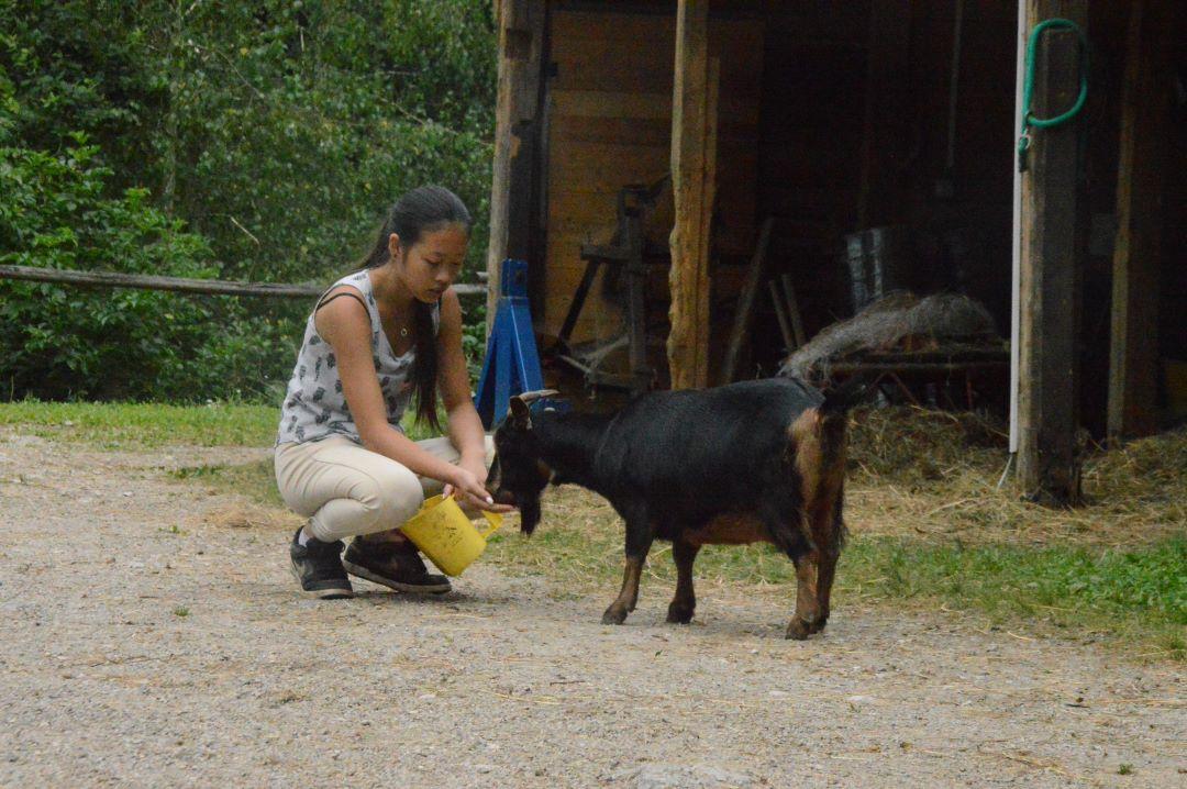ranč kaja in grom kozica 5