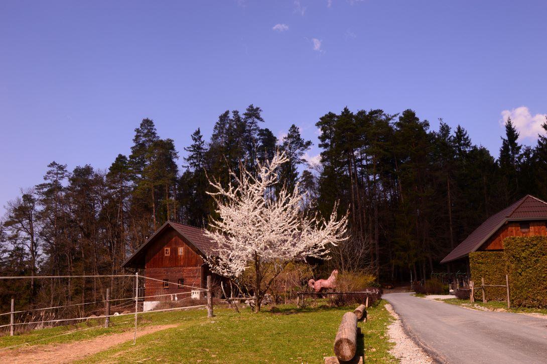 ranč kaja in grom okolica 2