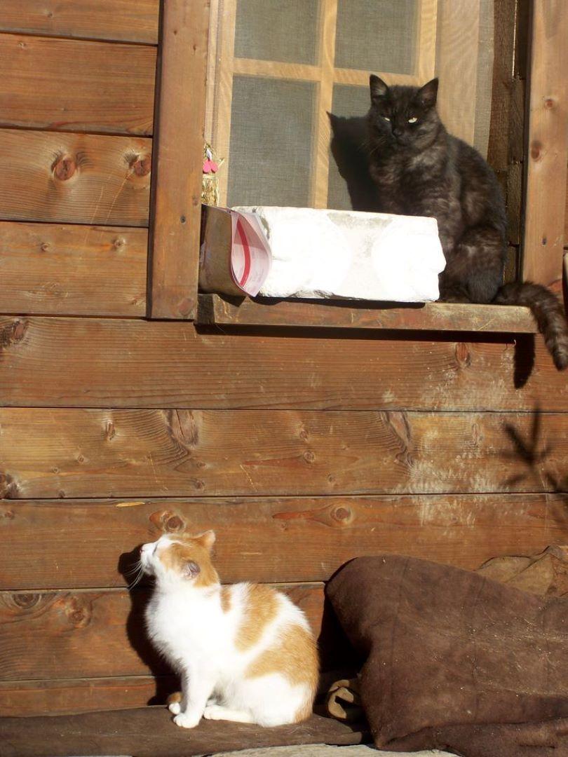 ranč kaja in grom okolica mačka