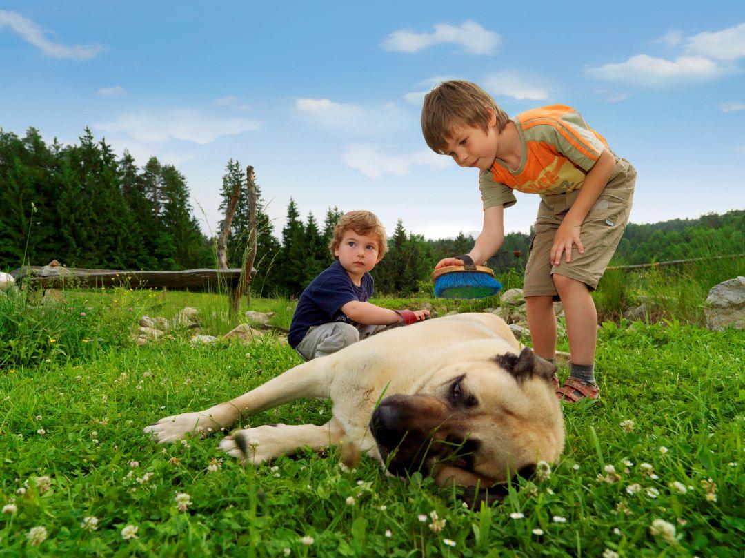 ranč kaja in grom otroci 14
