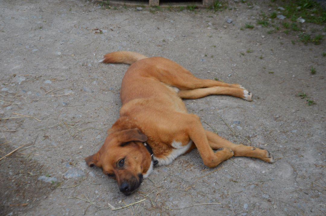 ranč kaja in grom pes 3