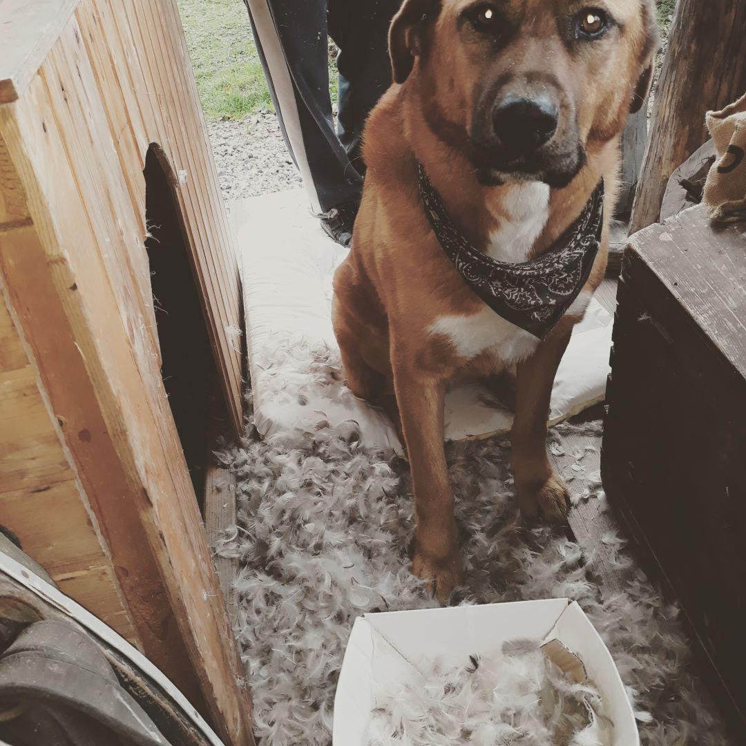 ranč kaja in grom pes 7
