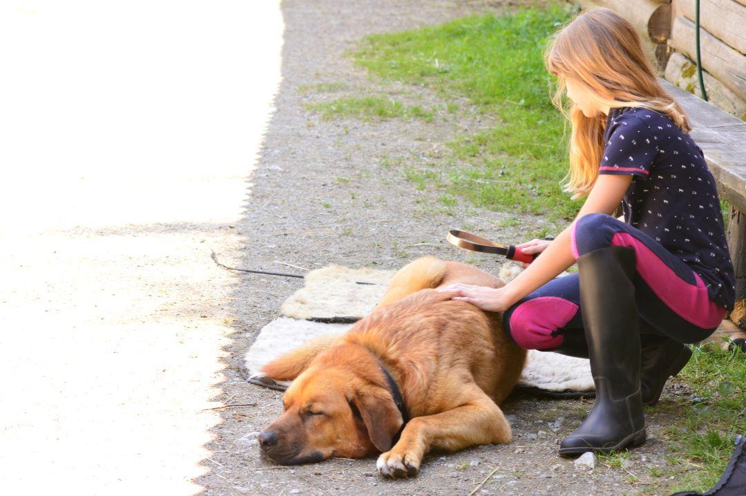 ranč kaja in grom pes