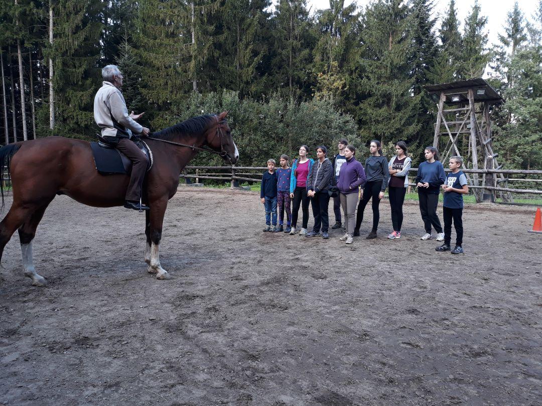 ranč kaja in grom projekt jadran lonža gibanje konja 2