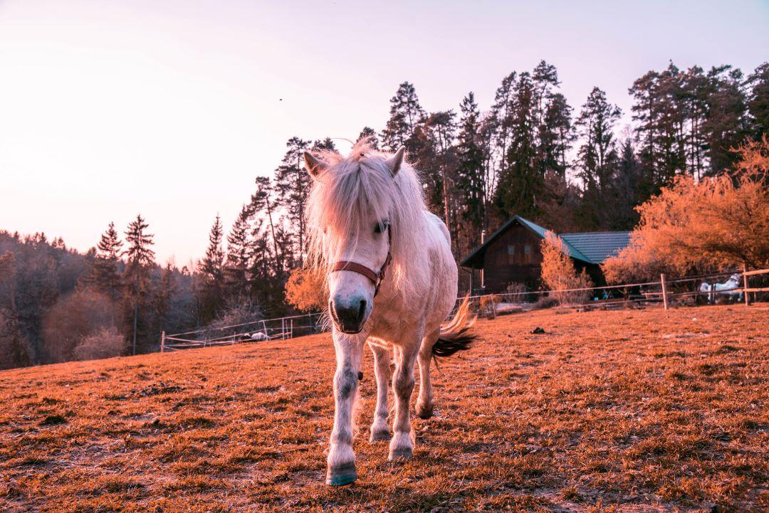 rančkajaingrom (1)