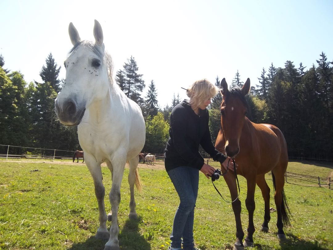 ranč kaja in grom horses